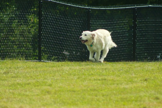 Remington gives it a tail wag as Guelph's first leash-free dog park opens (6 photos)
