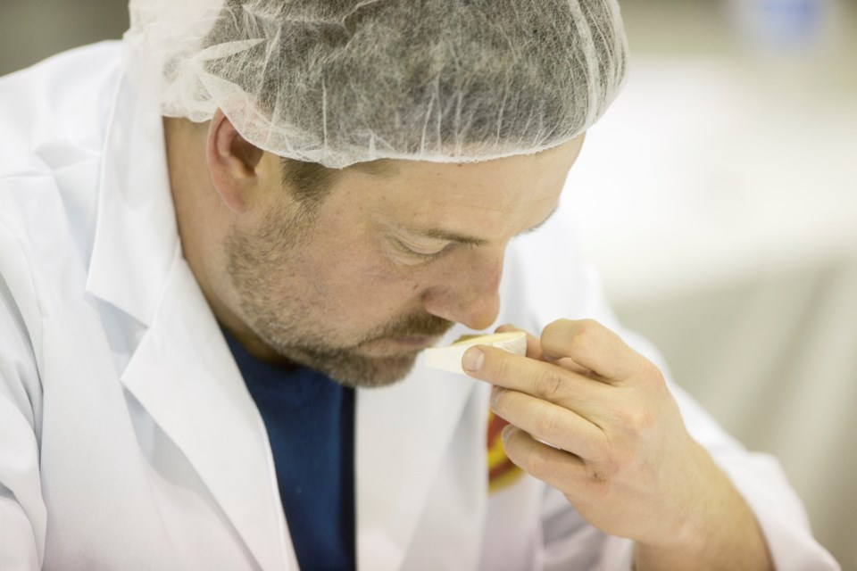 A judge at the Canada Cheese Awards observes the aroma of a cheese during judging Thursday at University of Guelph. Kenneth Armstrong/GuelphToday