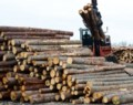Ontario boosts forestry road funding by $20M in response to softwood tariffs